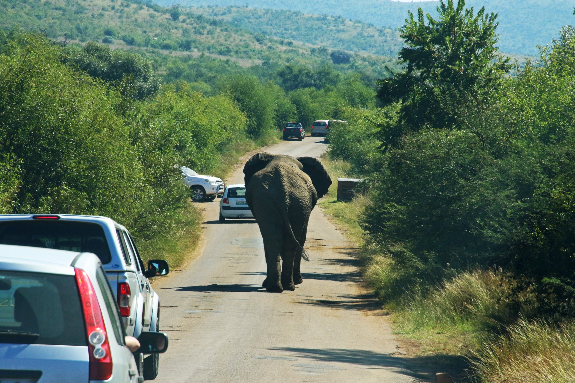 IoT and animals in the road